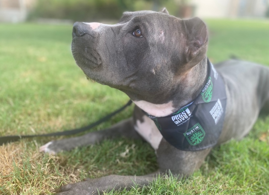 Missy, Austin FC's honorary mascot for the Aug. 18 game against Vancouver. (Photo: Austin Pets Alive!)