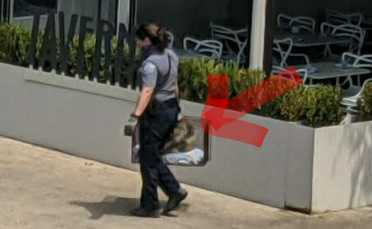 An animal control officer got a porcupine out of a tree in downtown Austin on Wednesday.  (Contributed photo)