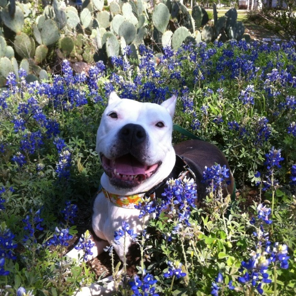 Baby spending her day in Bluebonnets. (Photo courtesy of Carri Crowe)