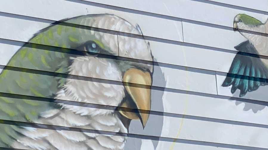 Mural honoring Austin's monk parakeets in downtown Austin (Picture: KXAN/Todd Bynum)