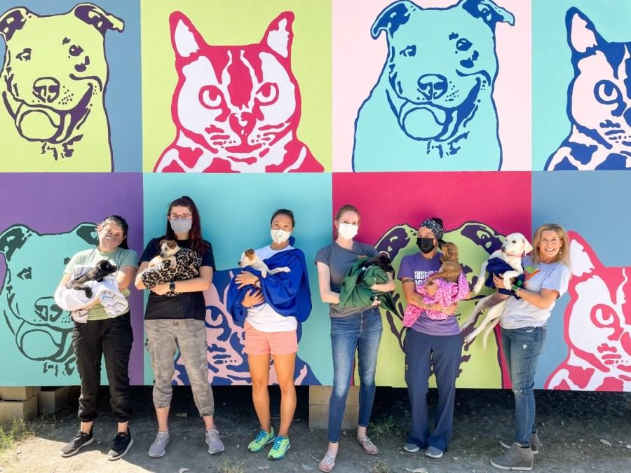 Several pets with NBC namesakes up for adoption at Austin Pets Alive! (Courtesy: APA!)