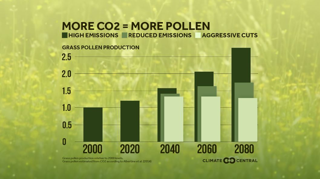 Allergies worsening as climate warms