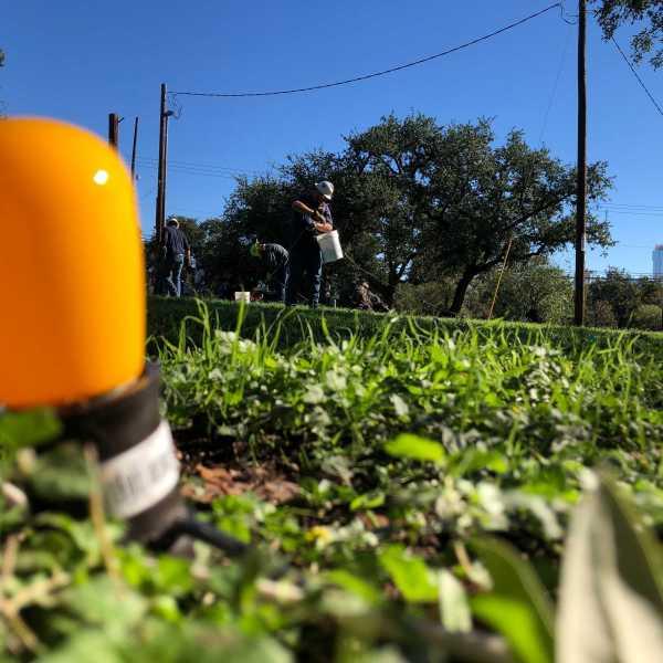 Austin Energy crews installed the lights for the Zilker Holiday Tree at the Zilker Park moontower Thursday. (KXAN photo/Julie Karam)