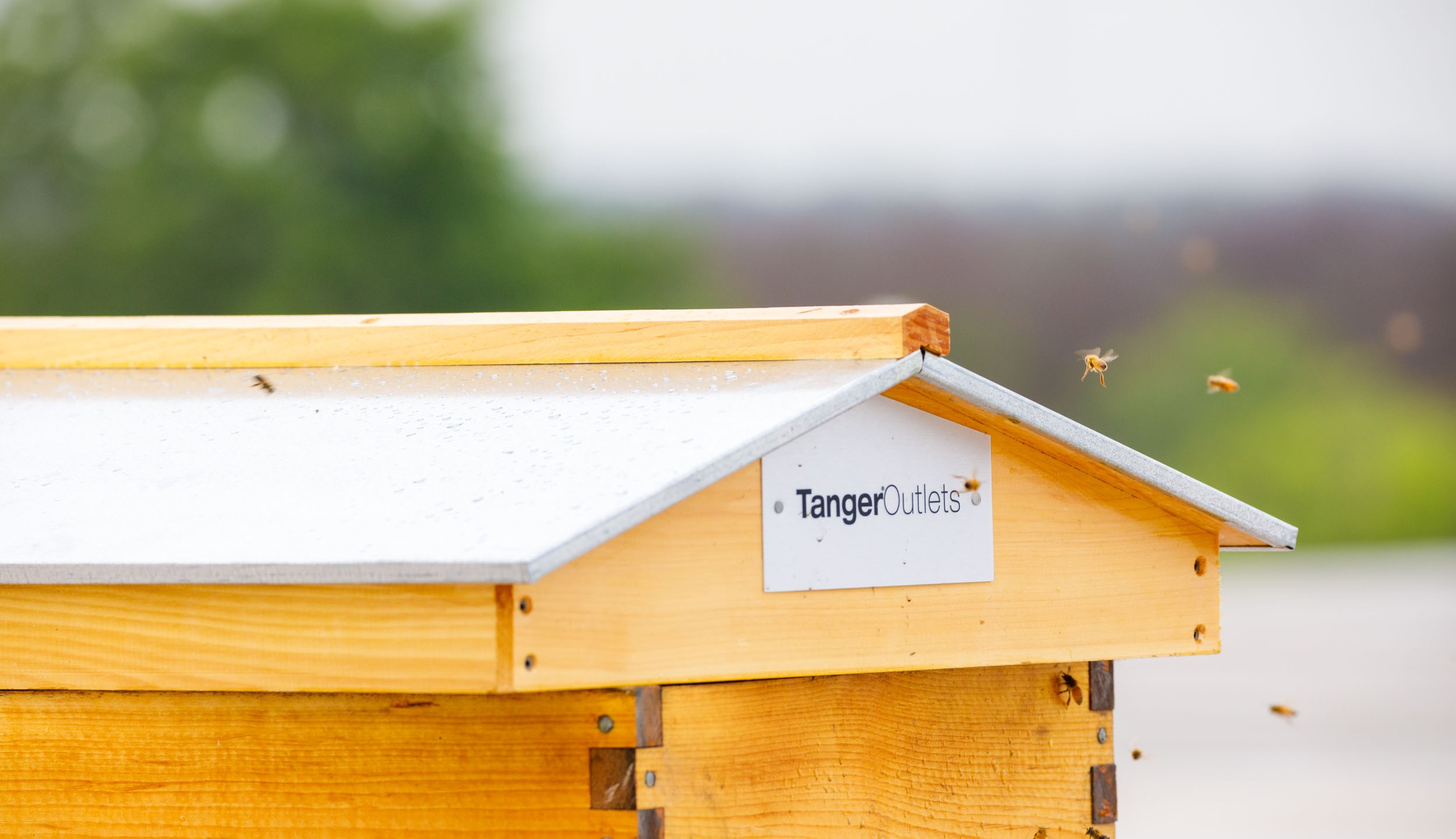 Rooftop beehives at the Tanger Outlets San Marcos (Courtesy: Tanger Outlets San Marcos)